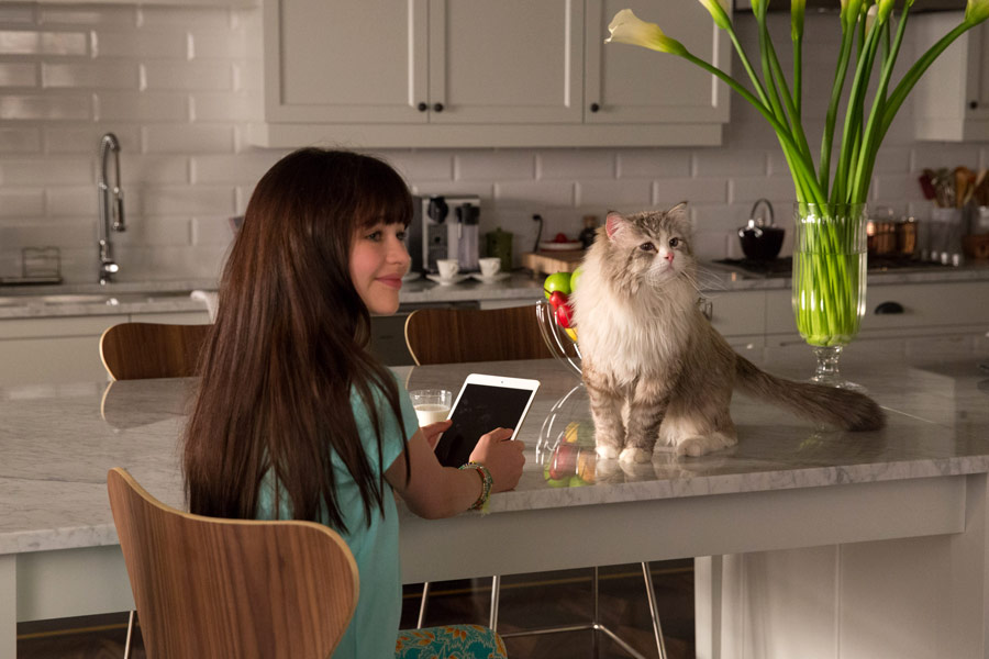 Filmowe Ferie: Jak zostać kotem