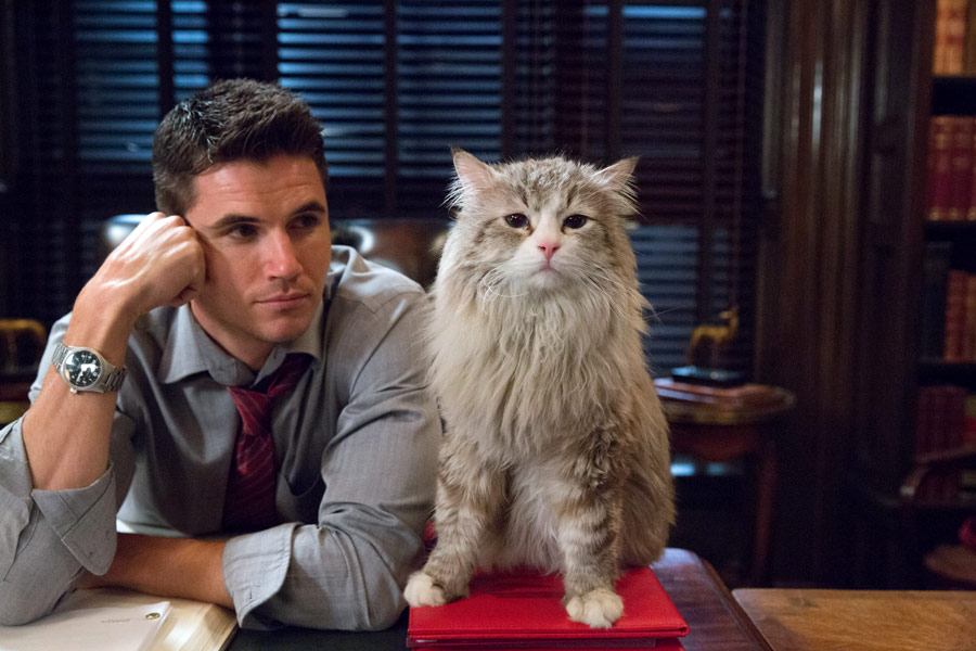 HITY 2016 ZA 11 ZŁ: Jak zostać kotem