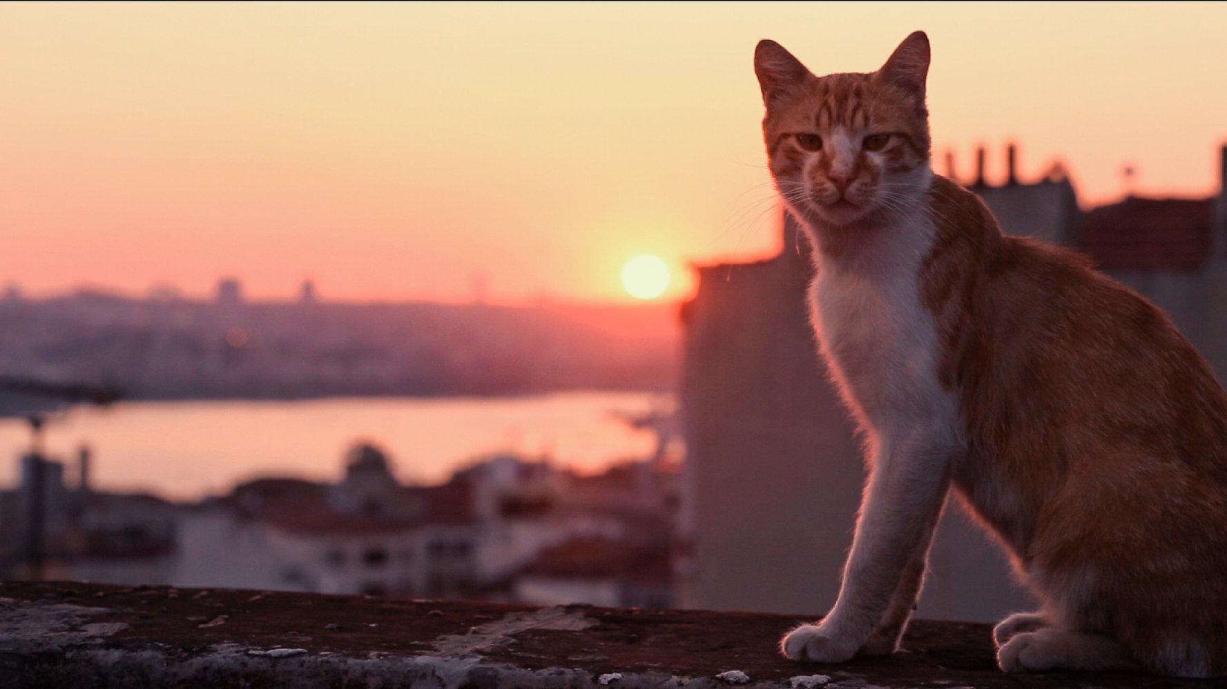 Kedi - sekretne życie kotów - przedpremiera